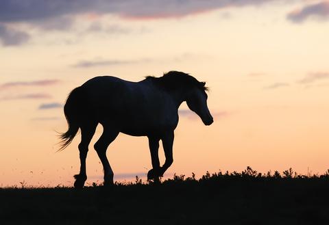 Reflective Horse